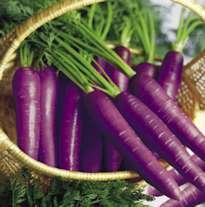 nlp techniques Purple Carrots