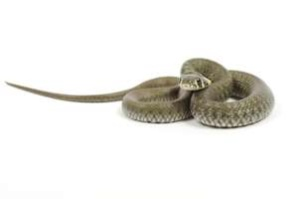 snake how to stop a panic attack
