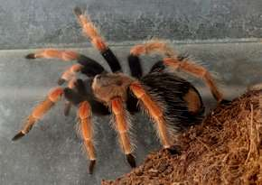 spider how to stop a panic attack